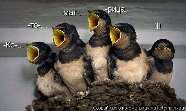 Котоматрица: -Ко-... -то-... -мат-... -рица. !!!