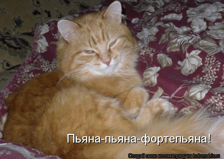 Котоматрица: Пьяна-пьяна-фортепьяна!