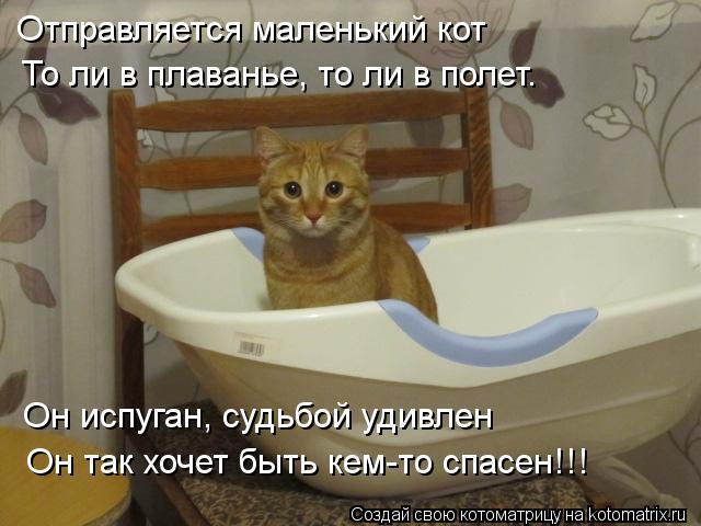 Котоматрица: Отправляется маленький кот То ли в плаванье, то ли в полет. Он испуган, судьбой удивлен Он так хочет быть кем-то спасен!!!