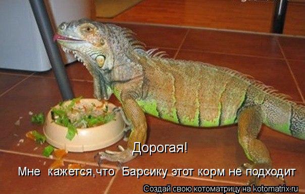 Котоматрица - Дорогая! Мне  кажется,что  Барсику этот корм не подходит
