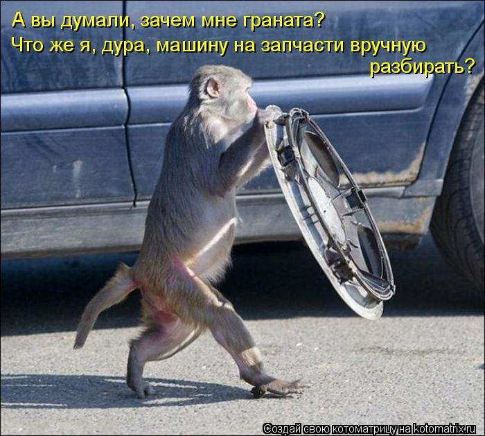 Котоматрица: А вы думали, зачем мне граната? Что же я, дура, машину на запчасти вручную  разбирать?