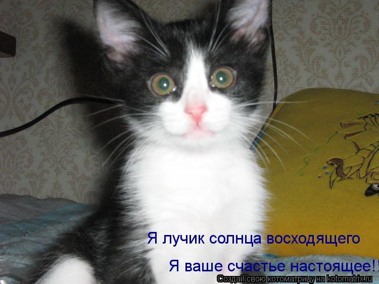Котоматрица: Я ваше счастье настоящее!!! Я лучик солнца восходящего
