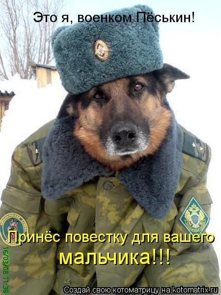 Котоматрица: Это я, военком Пёськин! Принёс повестку для вашего  мальчика!!!