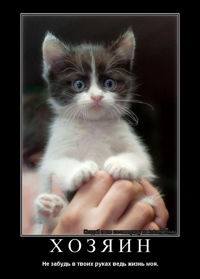 Котоматрица: хозяин Не забудь в твоих руках ведь жизнь моя.