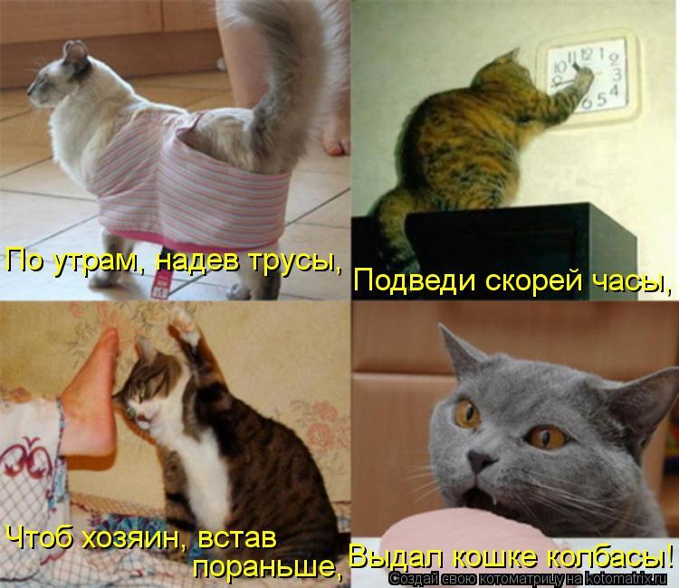 Котоматрица: Чтоб хозяин, встав  пораньше, Выдал кошке колбасы! По утрам, надев трусы, Подведи скорей часы,