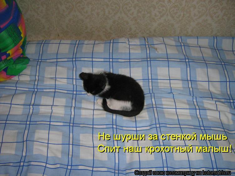 Котоматрица: Не шурши за стенкой мышь Спит наш крохотный малыш!