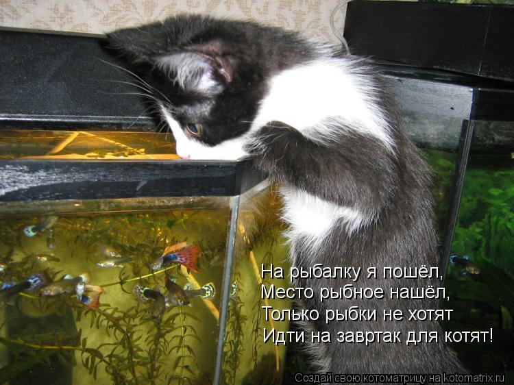 Котоматрица: На рыбалку я пошёл, Место рыбное нашёл, Идти на завртак для котят! Только рыбки не хотят