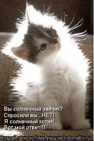 Котоматрица: Вы солнечный зайчик? Спросили вы...НЕТ! Я солнечный котик! Вот мой ответ!!!