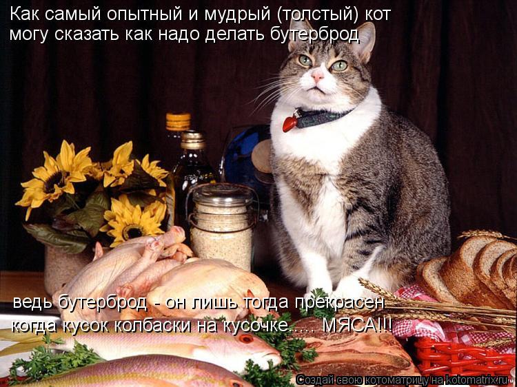Котоматрица: Как самый опытный и мудрый (толстый) кот могу сказать как надо делать бутерброд ведь бутерброд - он лишь тогда прекрасен когда кусок колбаск