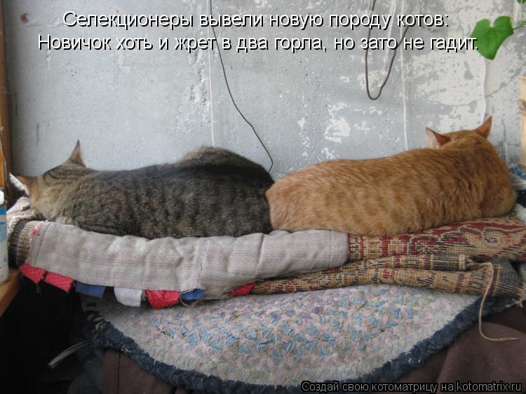 Котоматрица: Селекционеры вывели новую породу котов: Новичок хоть и жрет в два горла, но зато не гадит.