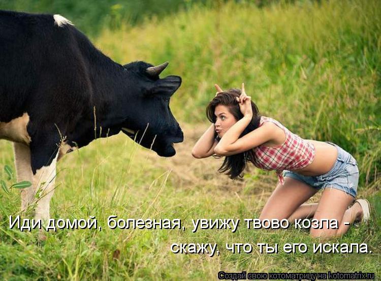 Котоматрица - Иди домой, болезная, увижу твово козла - скажу, что ты его искала.