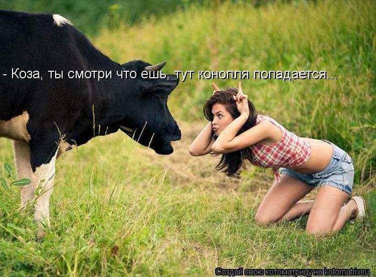 Котоматрица: - Коза, ты смотри что ешь, тут конопля попадается...