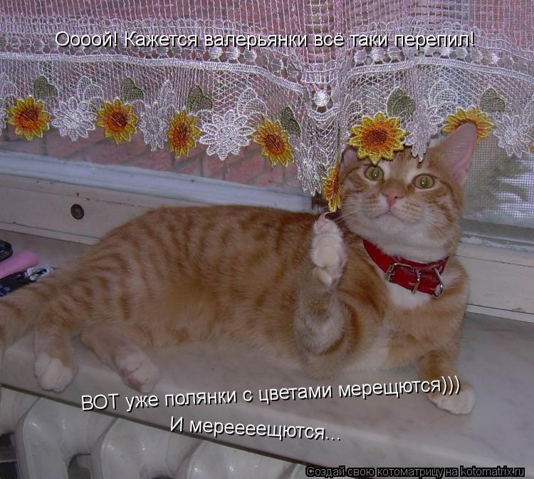 http://kotomatrix.ru/images/lolz/2012/02/24/1121318.jpg