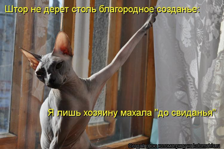 """Котоматрица - Штор не дерет столь благородное созданье: Я лишь хозяину махала """"до св"""