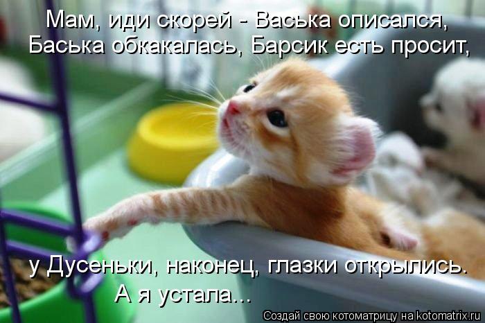 Котоматрица - Мам, иди скорей - Васька описался, Баська обкакалась, Барсик есть прос