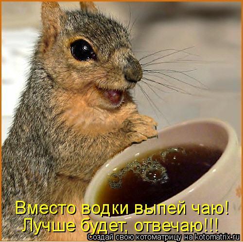 Котоматрица - Вместо водки выпей чаю! Лучше будет, отвечаю!!!