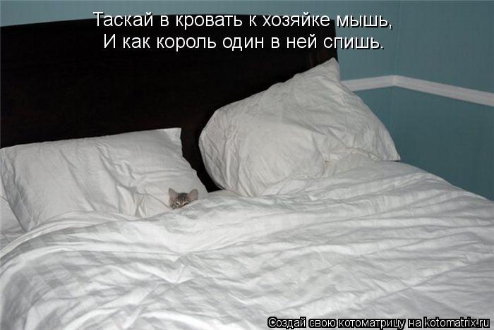 Котоматрица: Таскай в кровать к хозяйке мышь, И как король один в ней спишь.