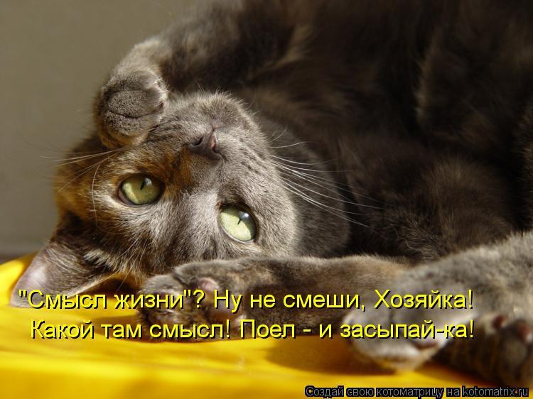 """Котоматрица: """"Смысл жизни""""? Ну не смеши, Хозяйка! Какой там смысл! Поел - и засыпай-ка!"""