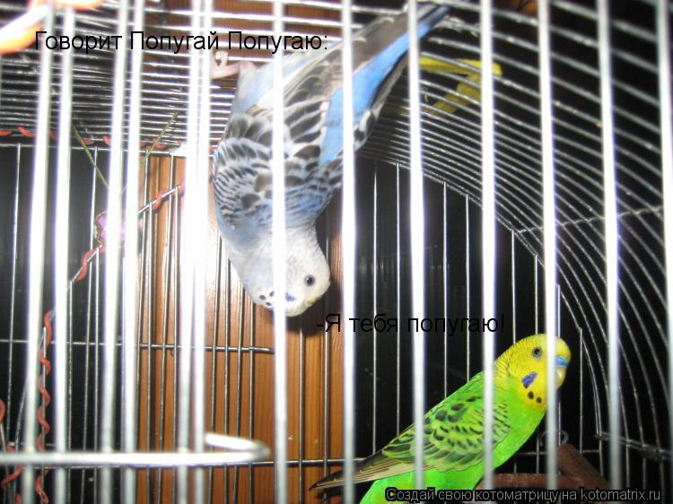 Котоматрица: Говорит Попугай Попугаю: -Я тебя попугаю!