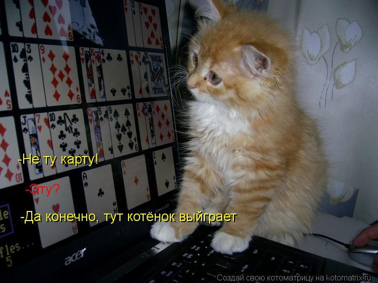 Котоматрица: Не -Не ту карту! -Эту? -Да конечно, тут котёнок выйграет
