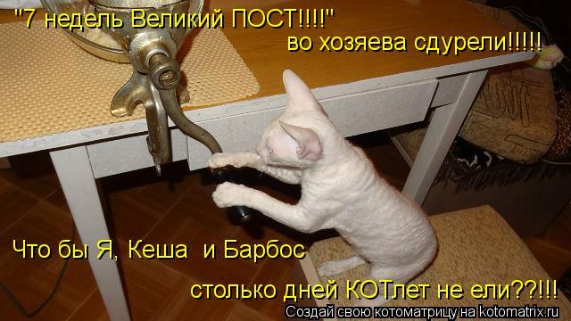 """Котоматрица: """"7 недель Великий ПОСТ!!!!"""" во хозяева сдурели!!!!! столько дней КОТлет не ели??!!! Чтобшг Что бы Я, Кеша  и Барбос"""
