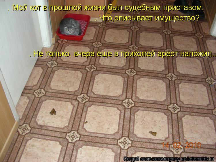 Котоматрица: – Мой кот в прошлой жизни был судебным приставом. – Что,описывает имущество? – Не только, вчера еще в прихожей арест наложил...