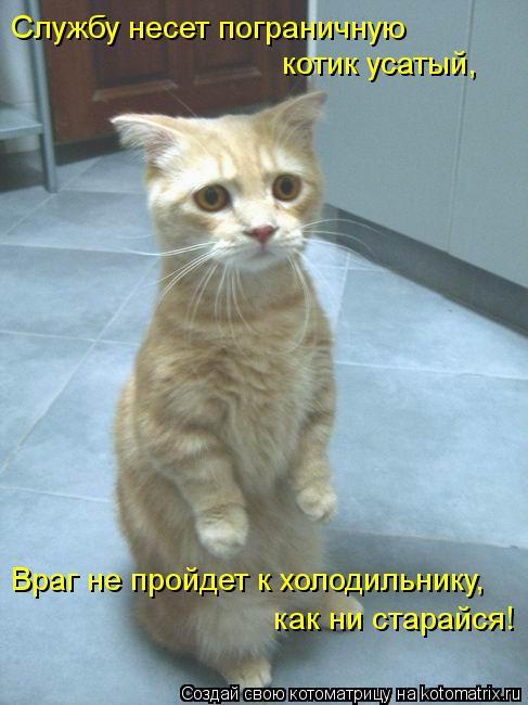 Котоматрица: Службу несет пограничную котик усатый, Враг не пройдет к холодильнику, как ни старайся!