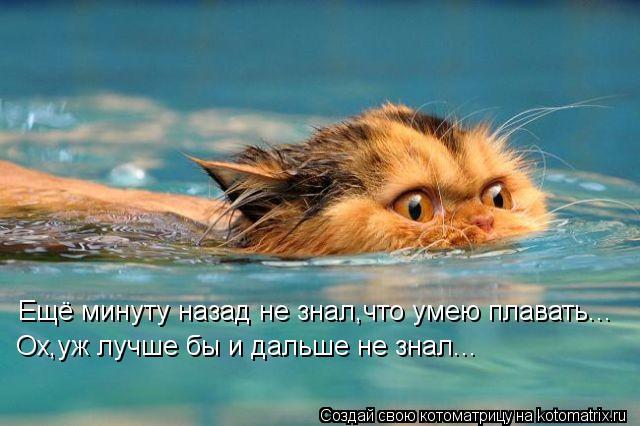 Котоматрица - Ещё минуту назад не знал,что умею плавать... Ох,уж лучше бы и дальше н