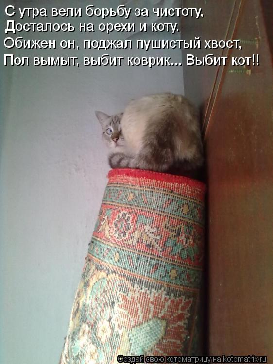 Котоматрица: С утра вели борьбу за чистоту, Досталось на орехи и коту. Обижен он, поджал пушистый хвост, Пол вымыт, выбит коврик... Выбит кот!!