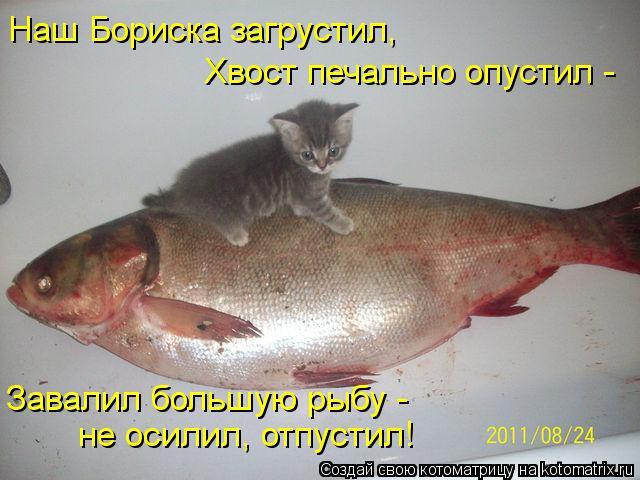 Котоматрица: Наш Бориска загрустил, Хвост печально опустил -  Завалил большую рыбу - не осилил, отпустил!