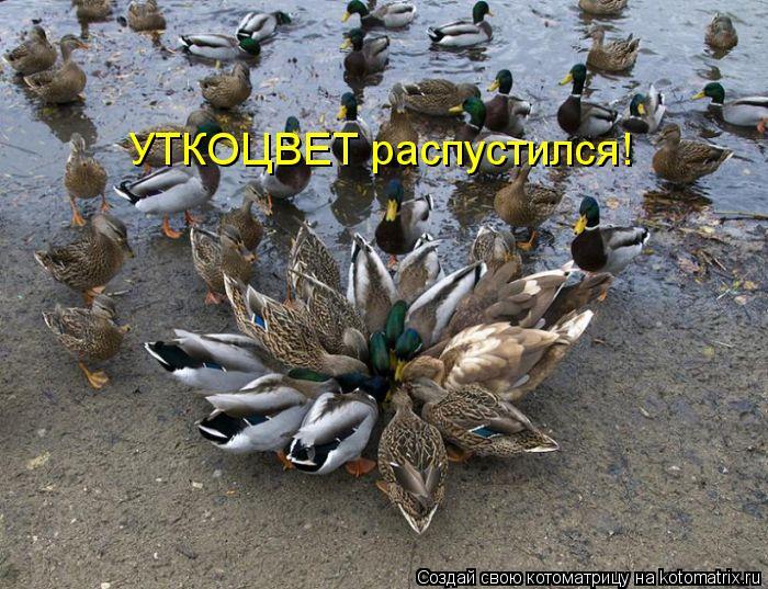 Котоматрица - УТКОЦВЕТ распустился!