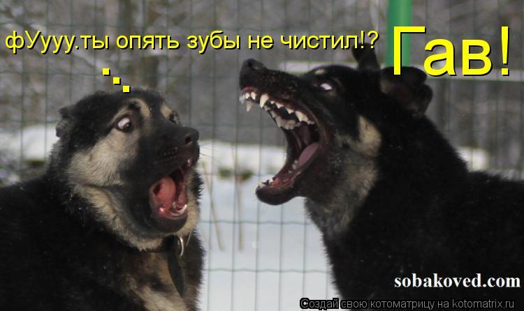 Котоматрица: Гав! фУууу.ты опять зубы не чистил!? . . .