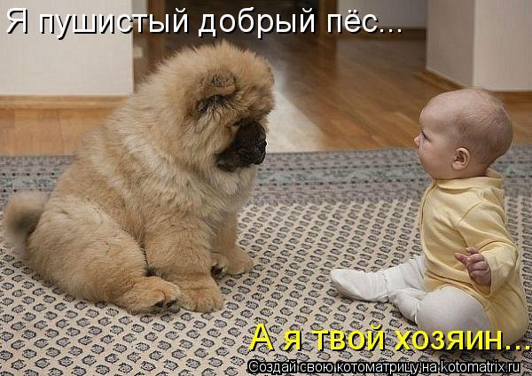 Котоматрица: А я твой хозяин...  Я пушистый добрый пёс...