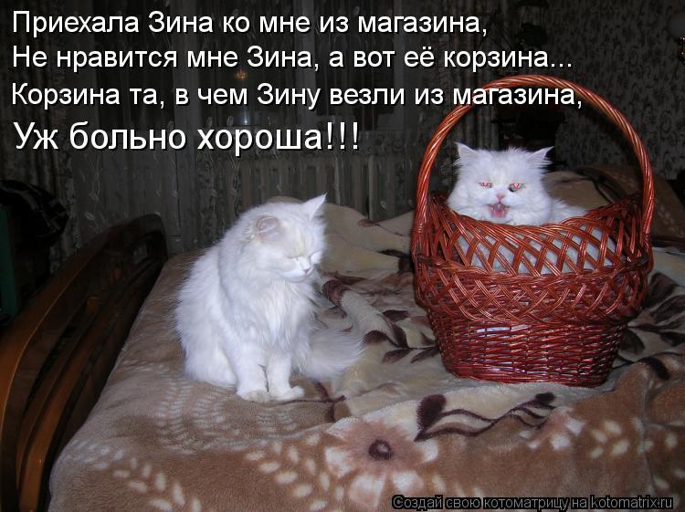Котоматрица: Приехала Зина ко мне из магазина, Не нравится мне Зина, а вот её корзина... Корзина та, в чем Зину везли из магазина, Уж больно хороша!!!