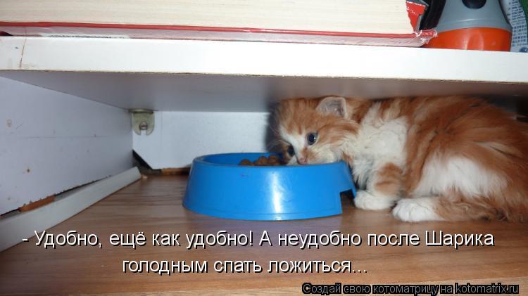 Котоматрица: - Удобно, ещё как удобно! А неудобно после Шарика голодным спать ложиться...