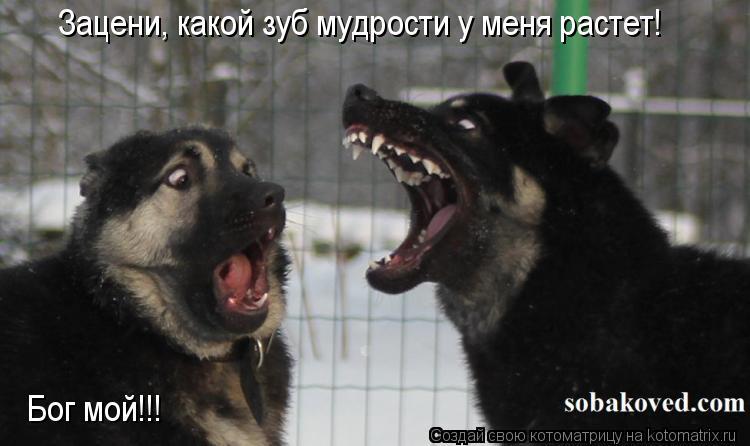 Котоматрица: Зацени, какой зуб мудрости у меня растет! Бог мой!!!