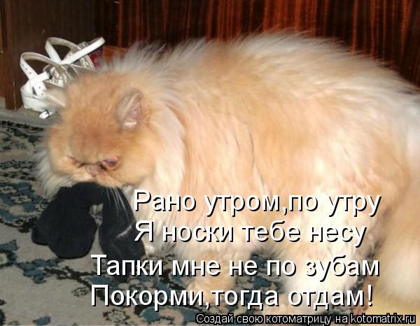 Котоматрица - Рано утром,по утру  Я носки тебе несу  Тапки мне не по зубам Покорми,т