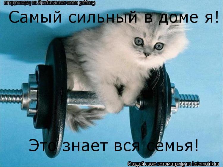 Котоматрица: Самый сильный в доме я!  Это знает вся семья! Самый сильный в доме я!