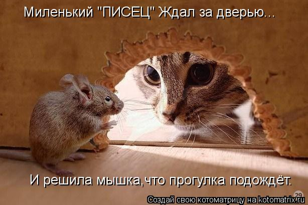 """Котоматрица: Миленький """"ПИСЕЦ"""" Ждал за дверью... И решила мышка,что прогулка подождёт."""