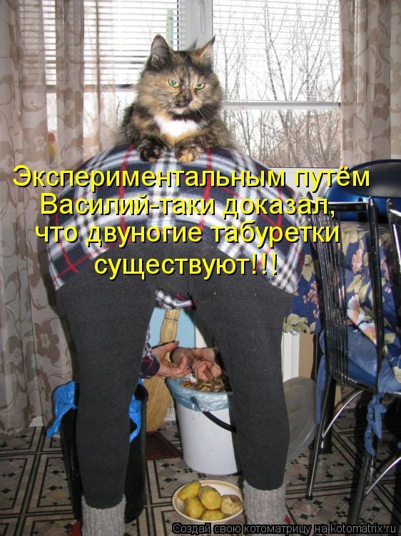 Котоматрица - Экспериментальным путём Василий-таки доказал, что двуногие табуретки с