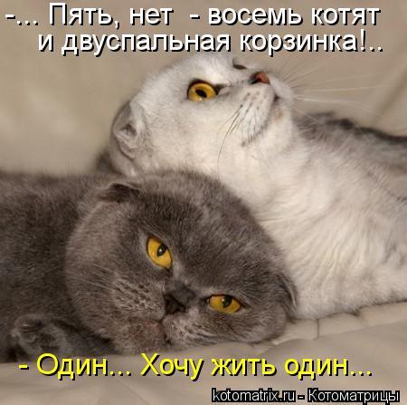 Котоматрица: -... Пять, нет  - восемь котят и двуспальная корзинка!.. - Один... Хочу жить один...