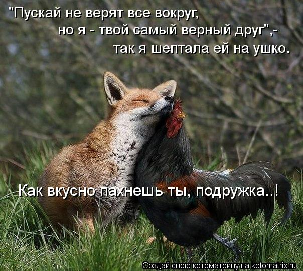 """Котоматрица: """"Пускай не верят все вокруг, но я - твой самый верный друг"""",- так я шептала ей на ушко. Как вкусно пахнешь ты, подружка..!"""