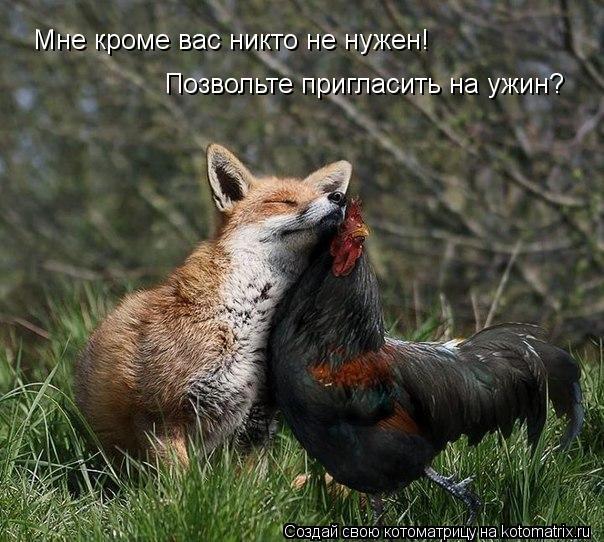 Котоматрица: Мне кроме вас никто не нужен! Позвольте пригласить на ужин?