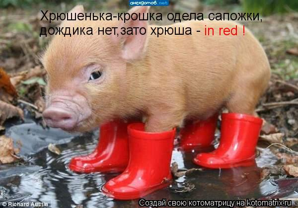 Котоматрица: Хрюшенька-крошка одела сапожки, дождика нет,зато хрюша - in red !