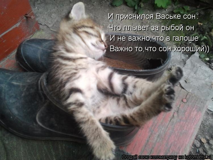 Котоматрица: И приснился Ваське сон Что плывет за рыбой он И не важно,что в галоше Важно то,что сон хороший)) :
