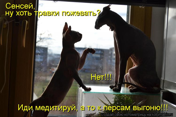 Котоматрица: Сенсей,  ну хоть травки пожевать? Нет!!! Иди медитируй, а то к персам выгоню!!!