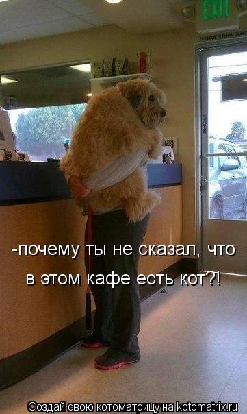 Котоматрица: -почему ты не сказал, что в этом кафе есть кот?!