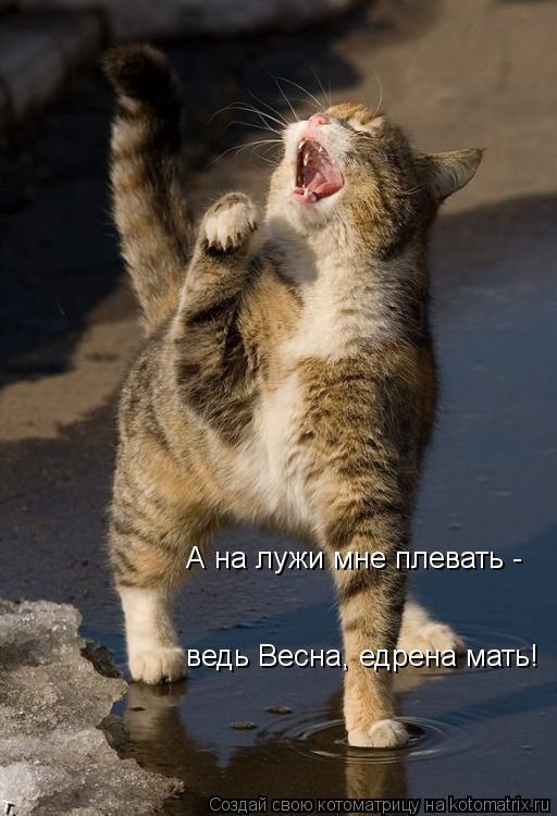 Котоматрица - А на лужи мне плевать - ведь Весна, едрена мать!