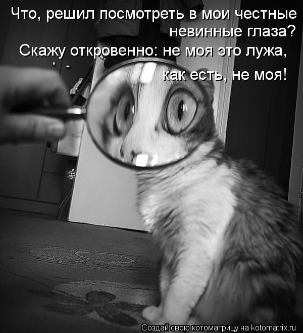 Котоматрица: Что, решил посмотреть в мои честные  невинные глаза? Скажу откровенно: не моя это лужа,  как есть, не моя!