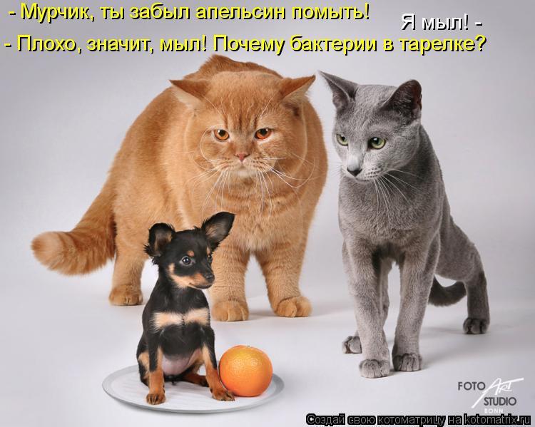 Котоматрица - - Мурчик, ты забыл апельсин помыть! - Плохо, значит, мыл! Почему бакте